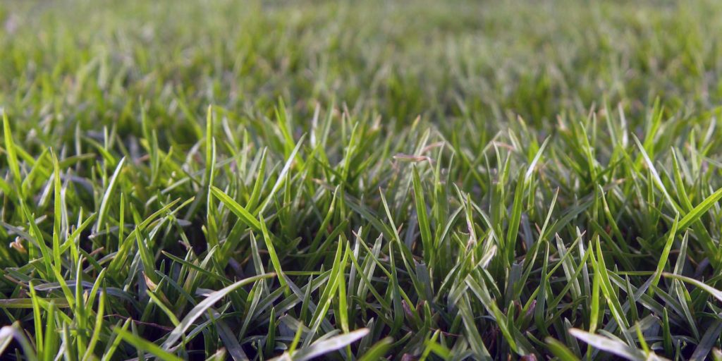 Artificial Grass Vs Real Turf