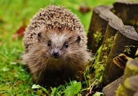 Build your own hedgehog house