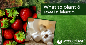 plant and sow in March