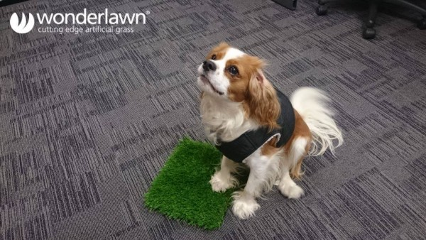 Dogs love artificial grass by Wonderlawn