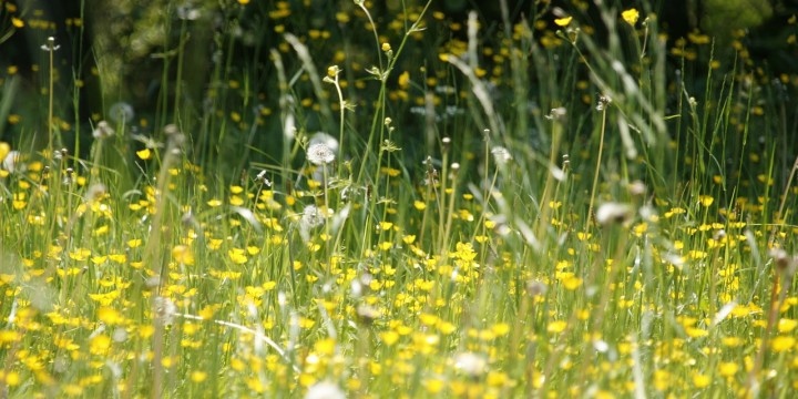 Tips to combat hay fever
