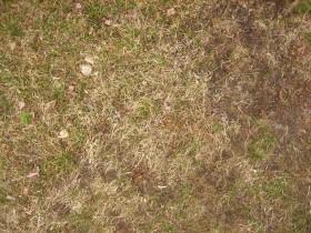 fix dormant grass